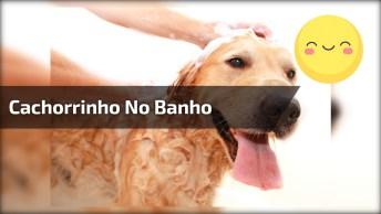 Cachorrinho No Banho E Escovando Os Dentinhos, Como É Bonzinho!