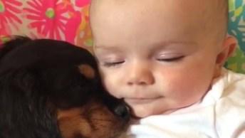 Cachorrinho No Sono Mais Gostoso Desse Mundo Com Seu Melhor Amigo!