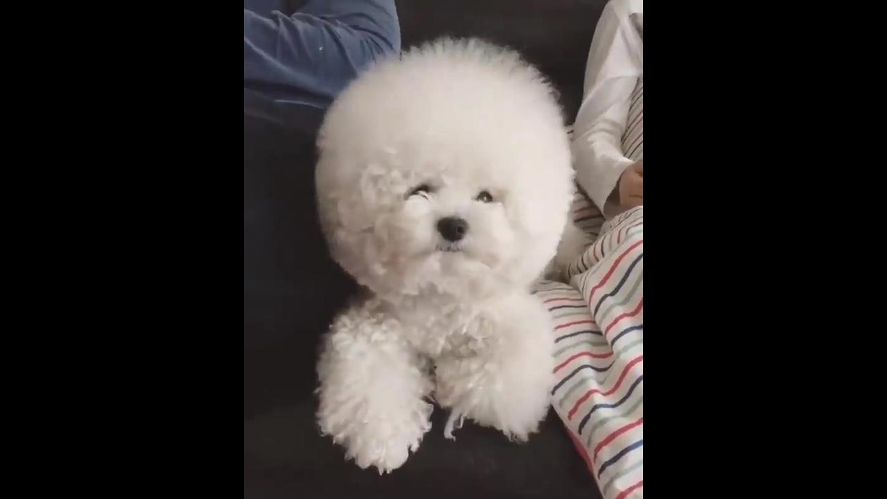 Cachorrinho ou algodão? Cachorrinho