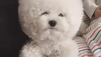 Cachorrinho Ou Algodão? Cachorrinho, O Mais Fofinho Que Você Vai Ver Hoje!