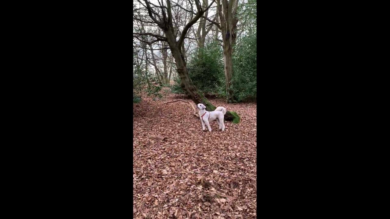 Cachorrinho paralisado em cima de um tronco de árvore