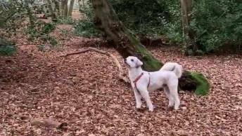 Cachorrinho Paralisado Em Cima De Um Tronco De Árvore, Confira!