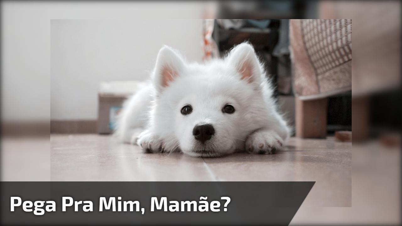 Pega pra mim, mamãe?