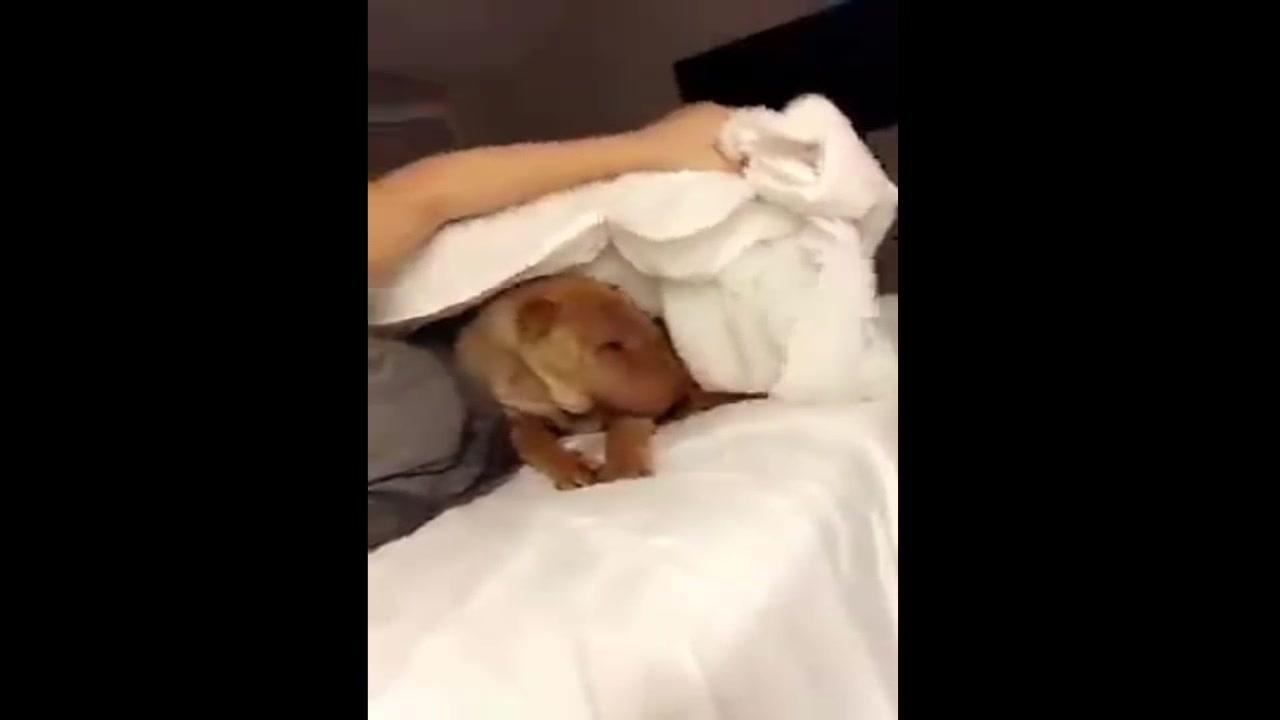 Cachorrinho pedindo pra deitar na cama