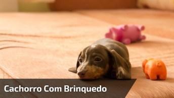 Cachorrinho Pega Seu Ursinho De Dormir E Se Encaminha Para Caminha!