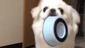Cachorrinho Pega Sua Vasilha De Comida E Olha Para Dona, Que Fofa!