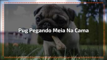 Cachorrinho Pegando Meia Em Cia Da Cama, Olha Só A Carinha Dele!