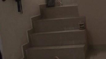 Cachorrinho Pegando Seu Brinquedinho, Olha A Alegria Dele!