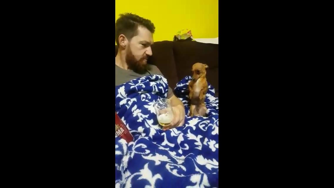 Cachorrinho pequeno, mas ele é bem audacioso hahaha