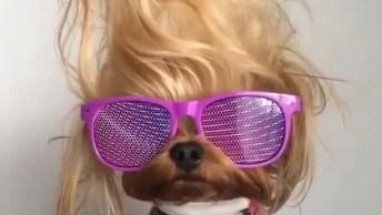 Cachorrinho Pousando Para Foto Todo Estiloso, Olha Só Este Óculos!