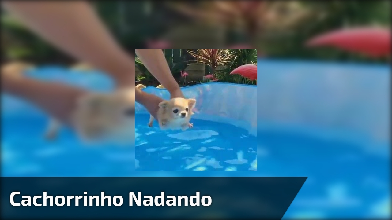 Cachorrinho nadando