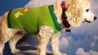 Cachorrinho Preparado Para Foto Nas Nuvens, Veja Que Ideia Incrível!