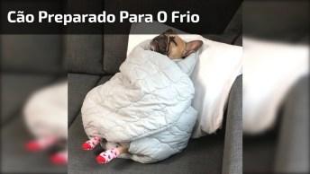 Cachorrinho Preparado Para O Frio, Esse Esta Embolado Hein!