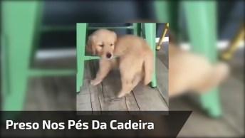 Cachorrinho Preso Nos Pés Da Cadeira, Olha Só O Drama Para Sair!