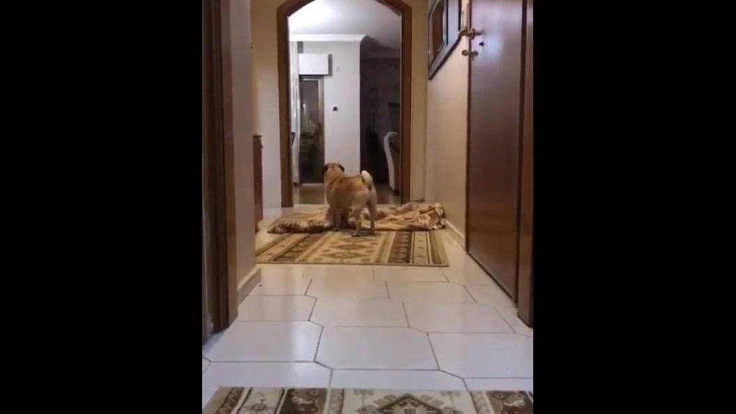 Cachorrinho procurando papai