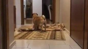 Cachorrinho Procurando Papai, Após Mágica Do Desaparecimento!