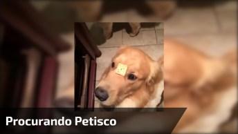 Cachorrinho Procurando Petisco, Olha Só O Desespero Dele Gente!