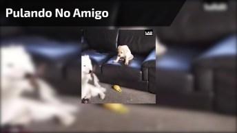 Cachorrinho Pula De Cima No Sofá Em Cachorro Maior Que Esta No Chão!