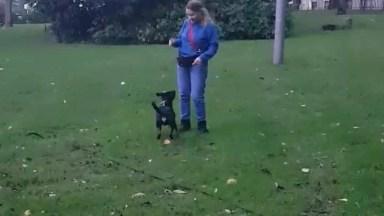 Cachorrinho Pulando De Alegria E Fazendo Coisas Incríveis!