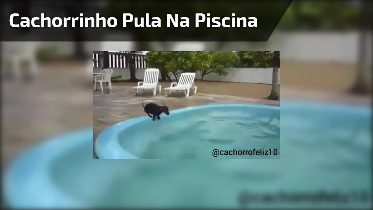 Cachorrinho pula na piscina