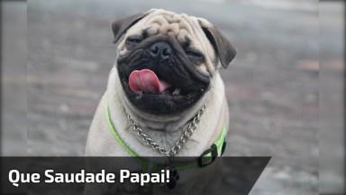 Cachorrinho Quase Mata Seu Dono Atropelado Hahaha, Que Engraçado!