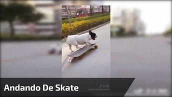 Cachorrinho Que Adora Andar De Skate, Olha Só Como Ele Manda Bem!