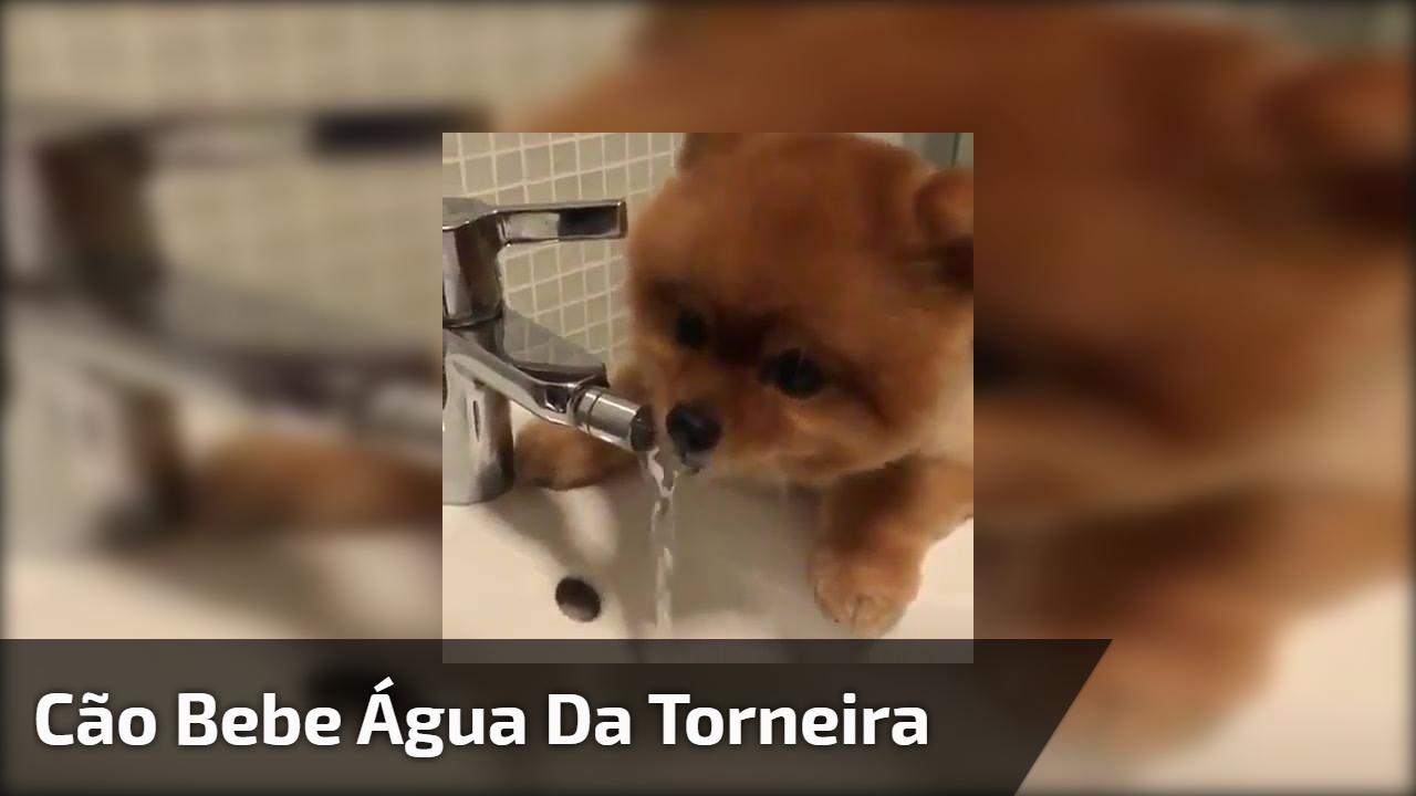 Cão bebe água da torneira