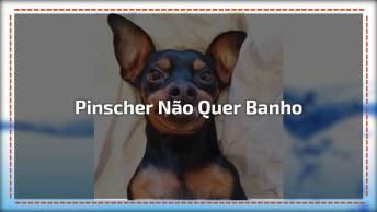 Cachorrinho Que Não Gosta De Tomar Banho, Olha Como Ele Fica Bravo Hahaha!