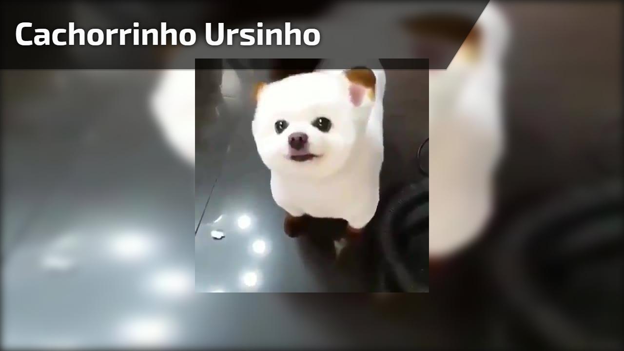Cachorrinho que se parece com um ursinho, veja como ele é charmoso!