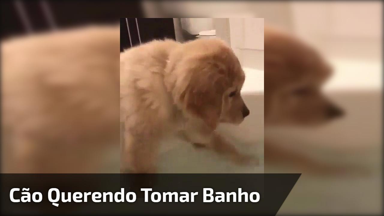 Cão querendo tomar banho