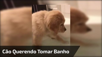 Cachorrinho Querendo Tomar Banho, Que Fofura Mais Linda!