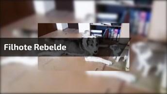 Cachorrinho Rebelde - Toda Família Tem Um Que É Mais 'Bravinho'!