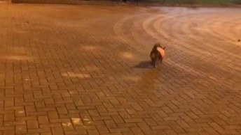 Cachorrinho Rebolando Pelas Ruas, Que Ousada Essa Bichinha, Hein!