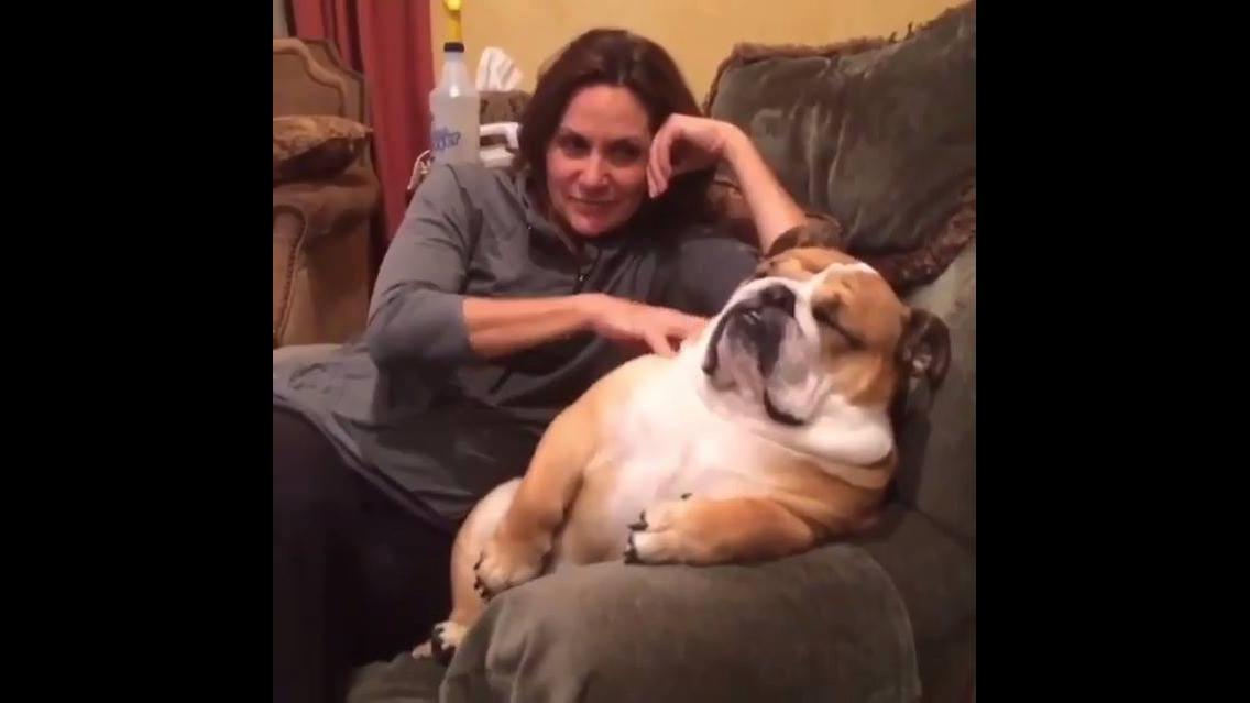 Cachorrinho recebendo carinho de sua mamãe