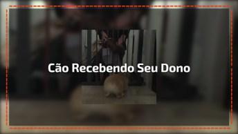 Cachorrinho Recebendo Seu Dono É Puro Amor, Vale A Pena Conferir!