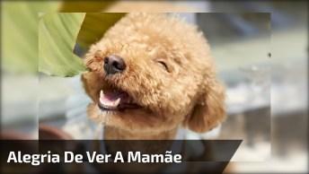 Cachorrinho Recebendo Sua Dona Na Escada, Olha Só A Alegria!