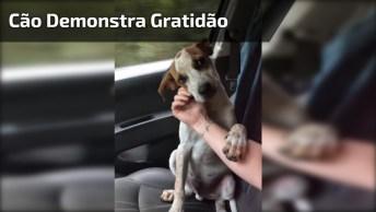 Cachorrinho Resgatado Demonstrando Gratidão Para Mulher Que O Salvou!