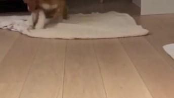 Cachorrinho Responde A Todos Comandos Para Poder Ganhar Brócolis, Que Fofo!