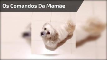 Cachorrinho Responde Aos Comandos Da Mamãe Todo Alegre, Olha Só Que Fofo!