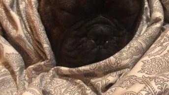 Cachorrinho Roncando Enquanto Dorme, Olha Só Que Coisinha Mais Fofa!