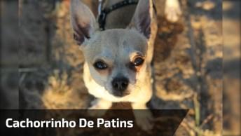 Cachorrinho Sabe Andar De Patins, Olha Só Como Ele É Todo Estiloso!