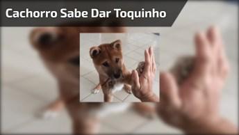 Cachorrinho Sabe Dr Toquinho, Olha Só Que Coisinha Fofa Gente!