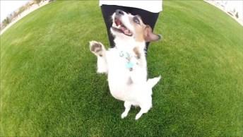 Cachorrinho Sabe Fazer Vários Truques, Veja Como Ele É Inteligente!