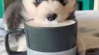 Cachorrinho Se Afogando Em Caneca De Leite, Que Adorável!