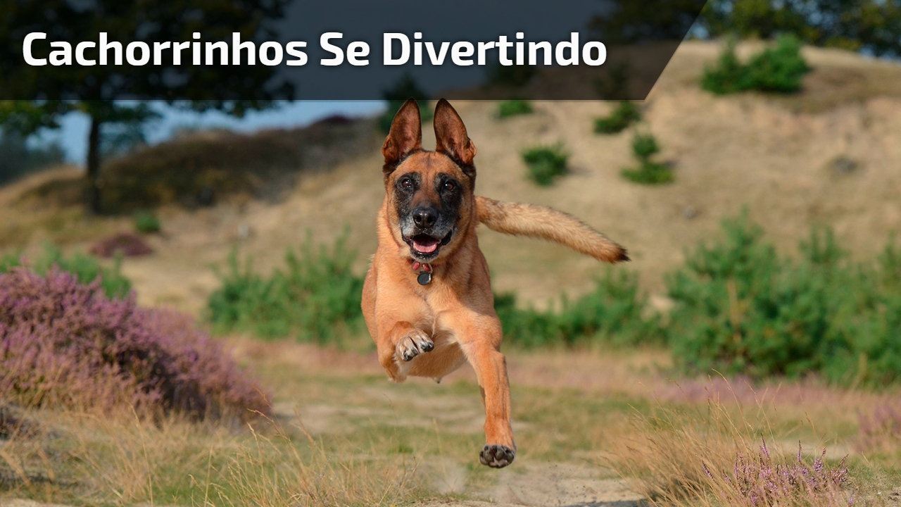 Cachorrinhos se divertindo