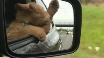 Cachorrinho Se Divertindo Na Janela Do Carro, Olha A Felicidade Do Amiguinho!