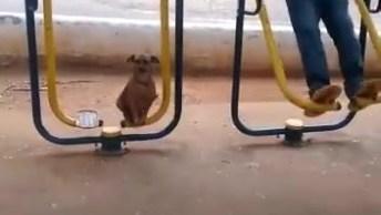 Cachorrinho Se Divertindo No Simulador De Caminhada Do Parque, Confira!