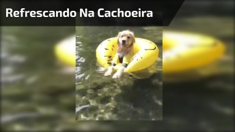 Cachorrinho Se Refrescando Na Cachoeira, Olha Só A Folga Ele Esta Até De Boia!