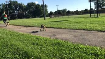 Cachorrinho Sem As Patinhas Dianteiras Andando Com A Ajuda De Rodinhas!