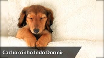 Cachorrinho Sendo Coberto Pra Dormir, Veja Como Ele Fecha Os Olhinhos!